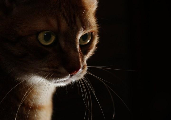 low key lighting cat