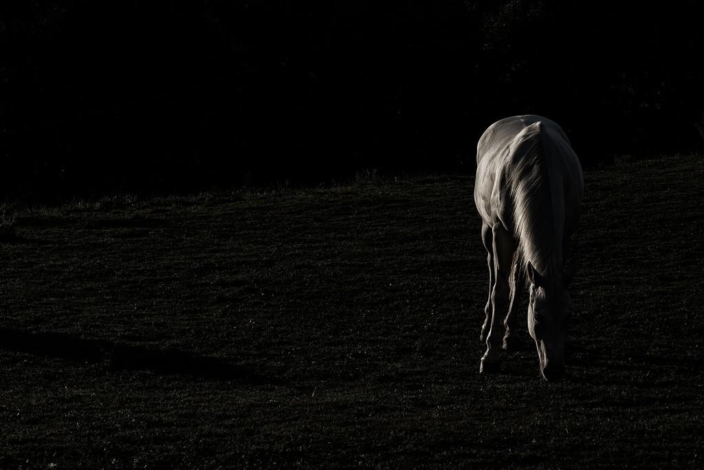 low key lighting horse