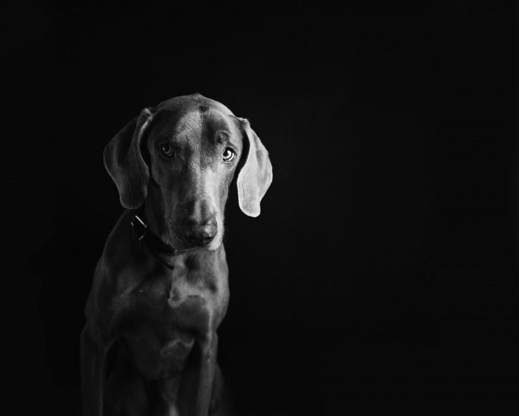 low key lighting dog & Low Key Lighting - How to Shoot Fabulous Dramatic Images azcodes.com