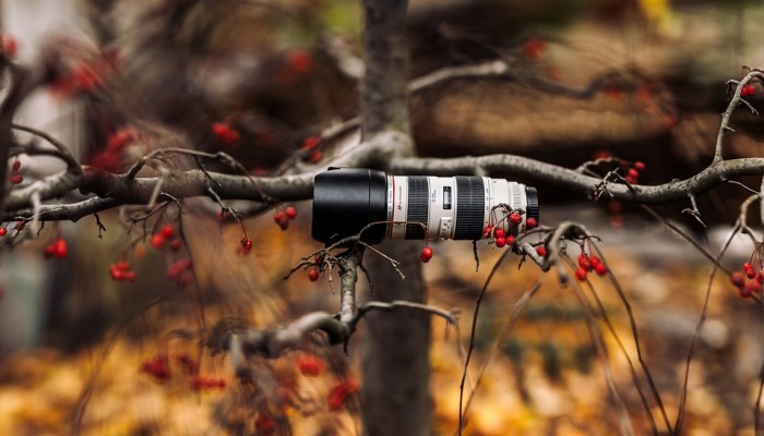 telephoto zoom lens in a tree