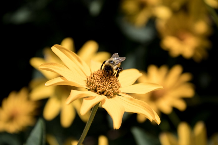 Photo of flowers and a bee shot with Canon T6i