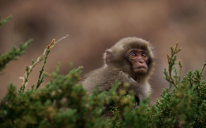 Sony A7 II Sample Image of a Monkey