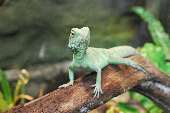 chameleon sitting on a branch
