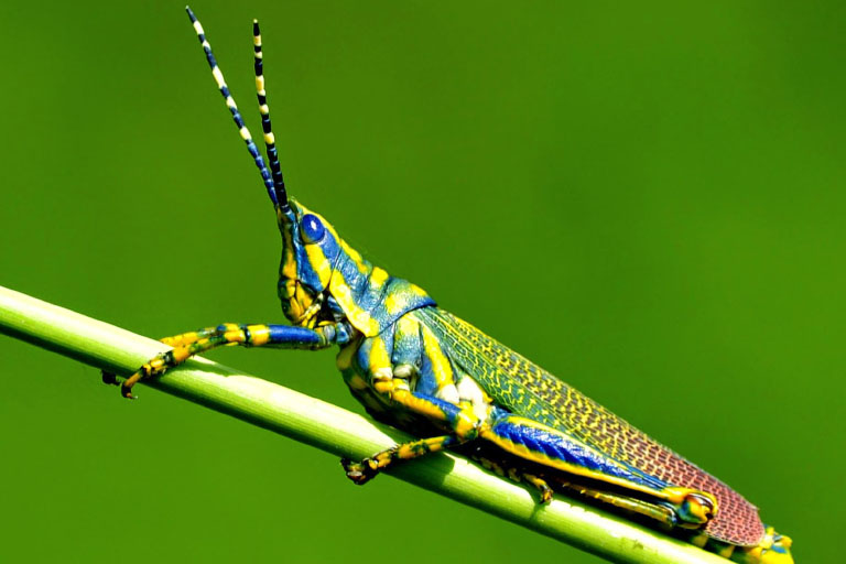 colorful little insect